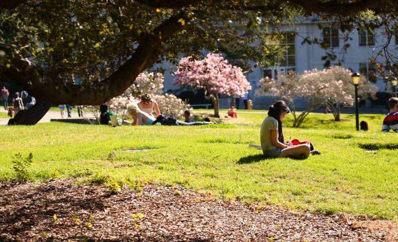 Students studying on UC Berkeley campus